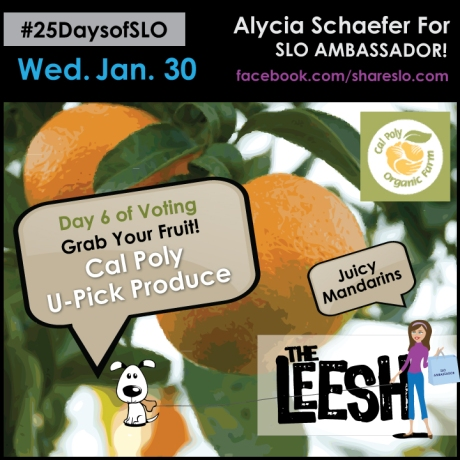 25 Days of SLO - Day 6