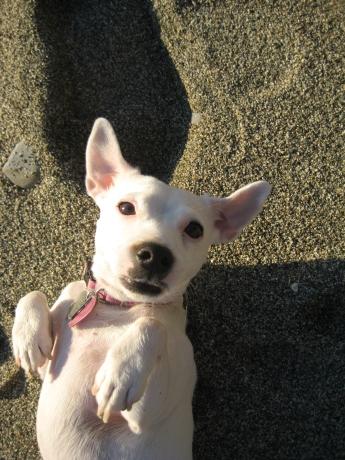 Roxy Pup